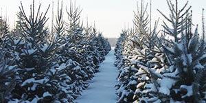 Christmas Trees, Wreaths, Spading Service | Howell Tree Farm